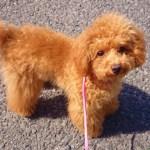 愛犬が「迷子」になった⁉迷子になった際の危険や探し方・必要な対応とは?