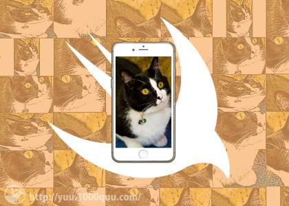 UIImageViewの表示方法のアイキャッチ画像