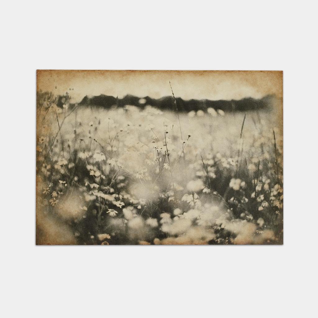 野生の花 の写真 (正面)