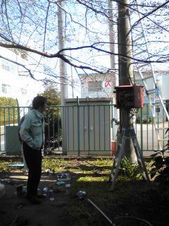 電気工事は桜の木の下