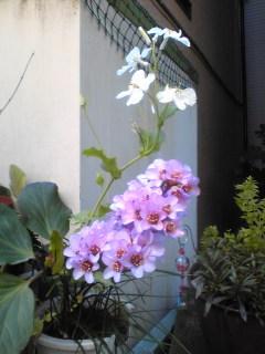 花盛りの路地裏