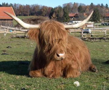 Die Kühe haben ja witzige Frisuren!
