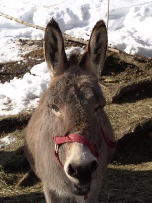 Esel haben ja super coole Ohren!