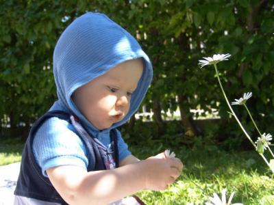 Eine Wuzzelraupe im Garten