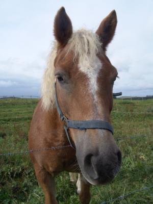 Die Pferde vom Jaggl sind ganz schön gewachsen