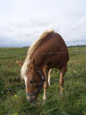 Ich mag Pferde gucken