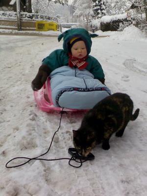 Ein Kätzchen ist auch noch unterwegs