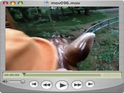 Wildsaureiten-Filmchen
