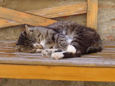 Eine Katze hält Siesta