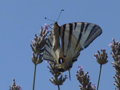Etwas weiter sitzt noch ein Schmetterling