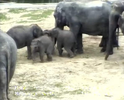 Die Elefanten im Kölner Zoo