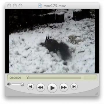 Ein Film von unserem Eichhörnchen