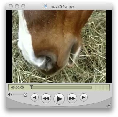 Die Pferde mampfen genüsslich das frische Heu