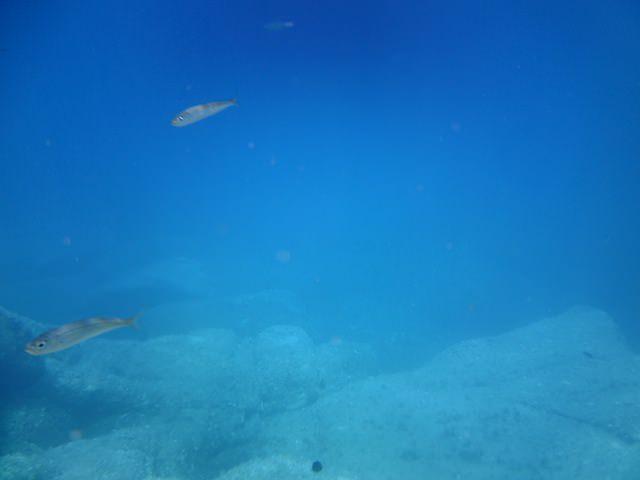 Ed altri pesciolini