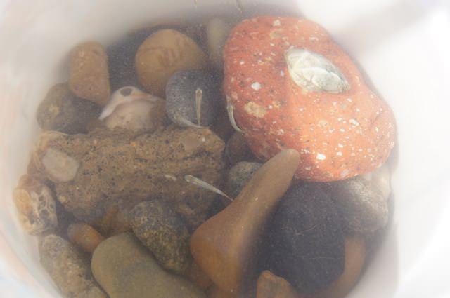 Fonzie ha pescato dei pesciolini