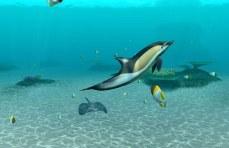 Ecco anche il delfino di Yves
