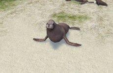 Sulla spiaggia, ci sono le foche