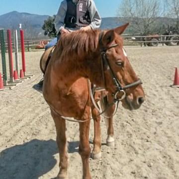 Yves con il suo cavallo Verusca