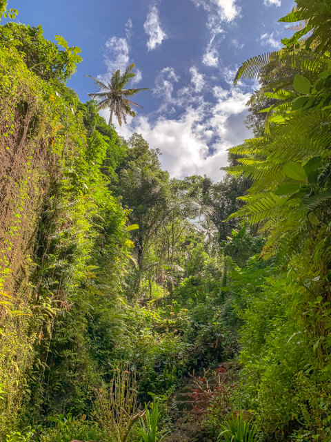 The vegetation is very beautiful and dense