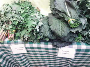 Farmers Market kale photoshop