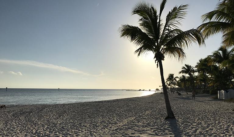 Strand, hav og palmer