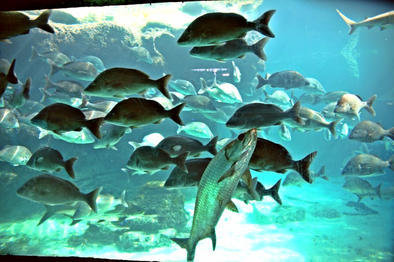 Diverse fisk