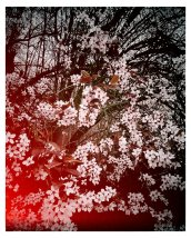 FLowering Tree March Luxembourg