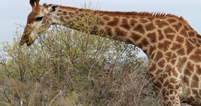 Tips voor betere Safari Foto's
