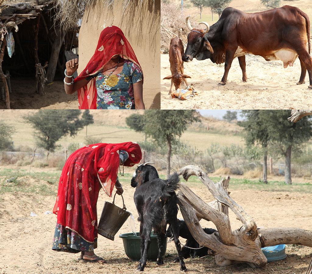 Boerenleven Rajasthan