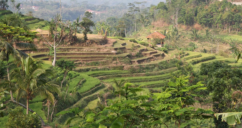 Java buiten t gebaande pad Windusari