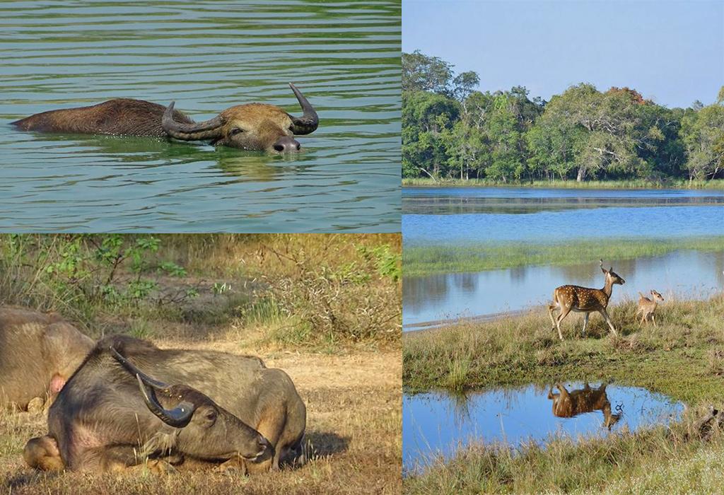 Sri Lanka safari foto's