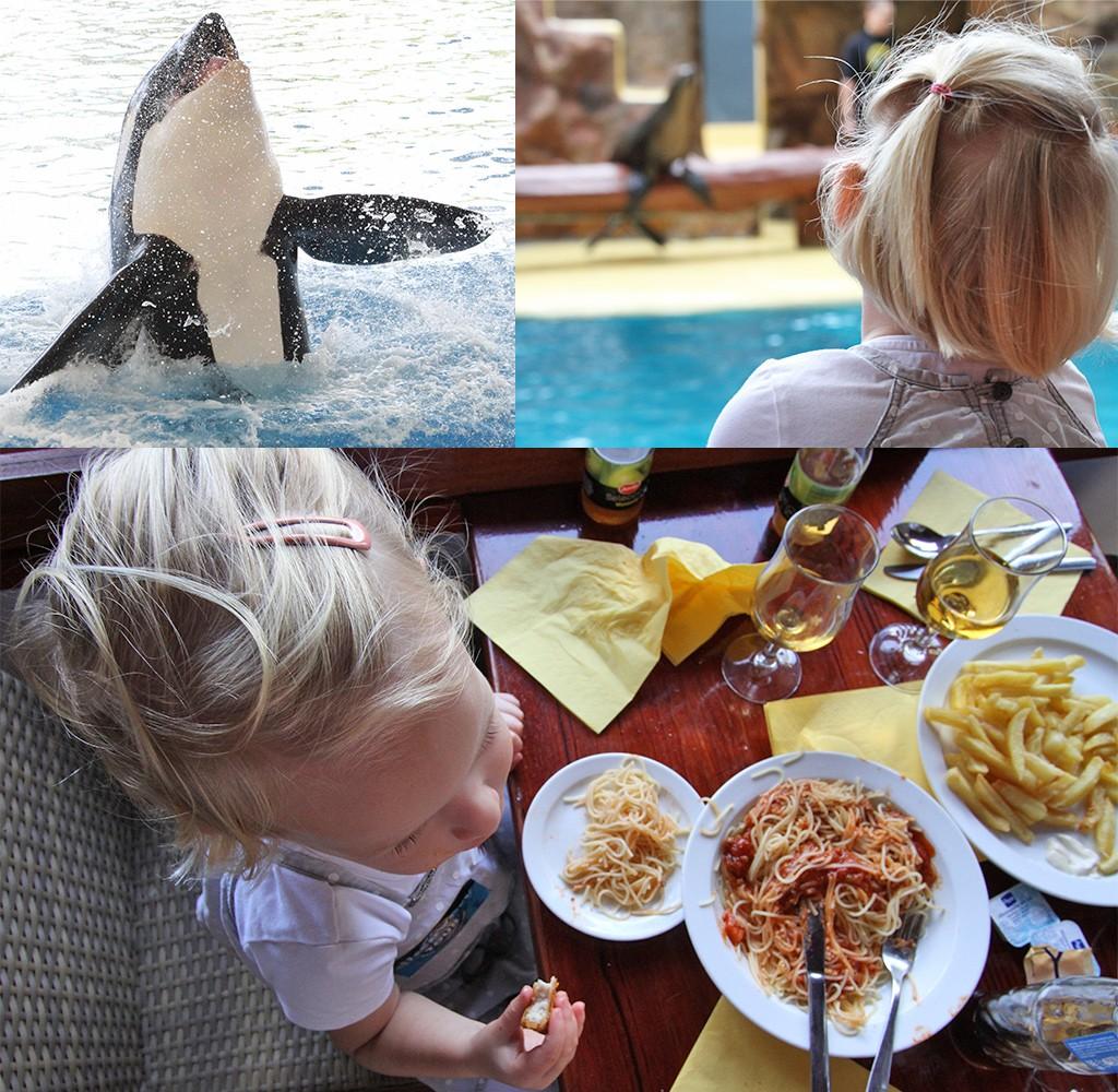 Tenerife met kinderen - Loro Parque shows