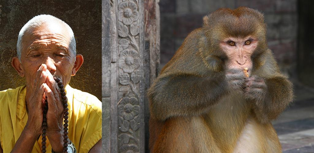 Biddende Tibetanen en brutale apen Swayambhunath Kathmandu