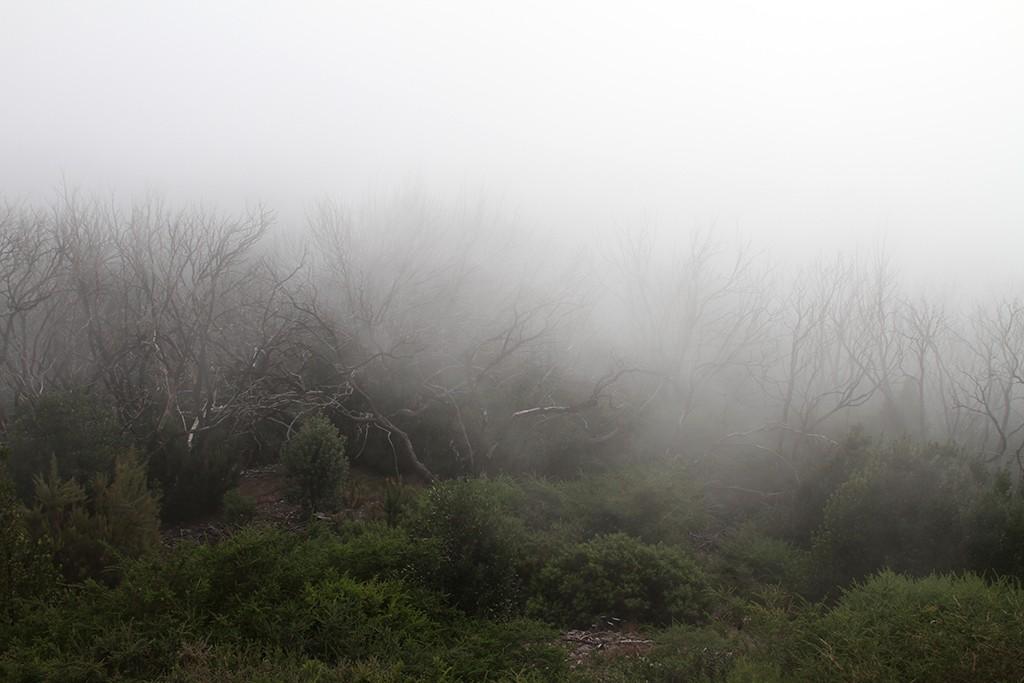 mysterieuze sfeer van mist