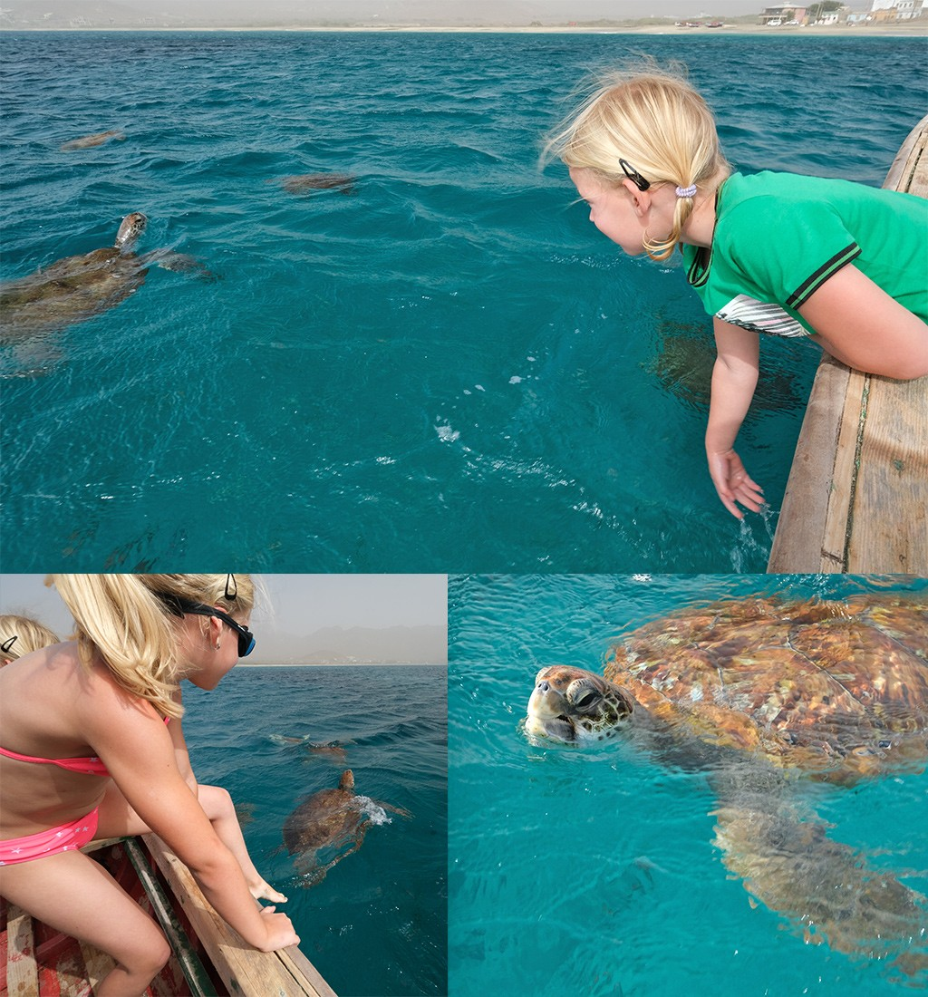 schildpadden Sao Pedro