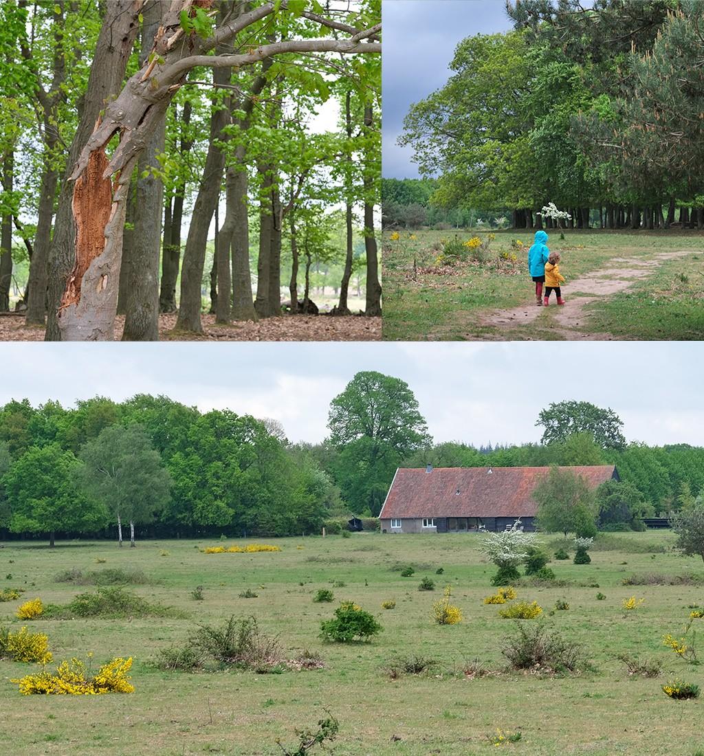start wandeling Plantage Willem III