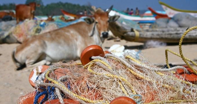 tempels en strandkoeien Tamil Nadu