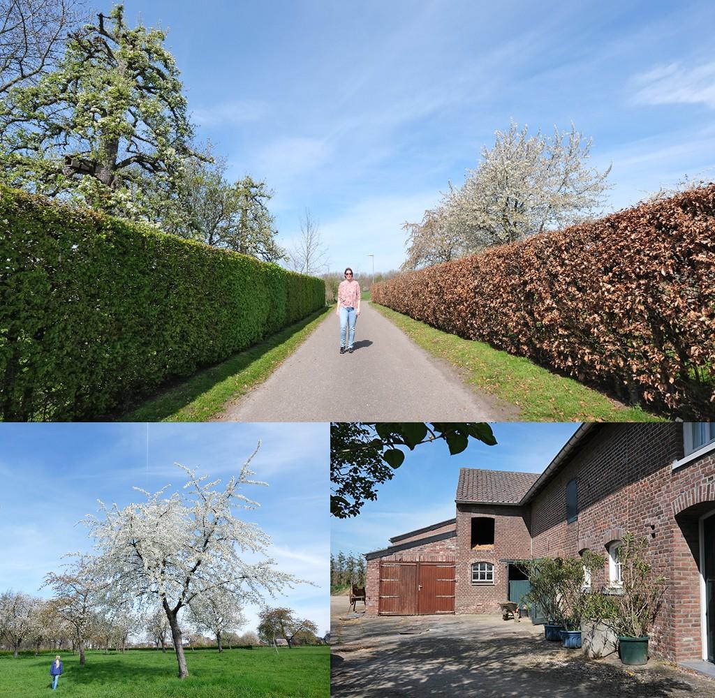 wandelen Zuid-Limburg bloesem en boerderijhoeves