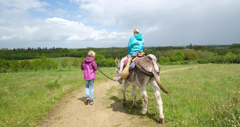 wandelen met een ezel in de Achterhoek