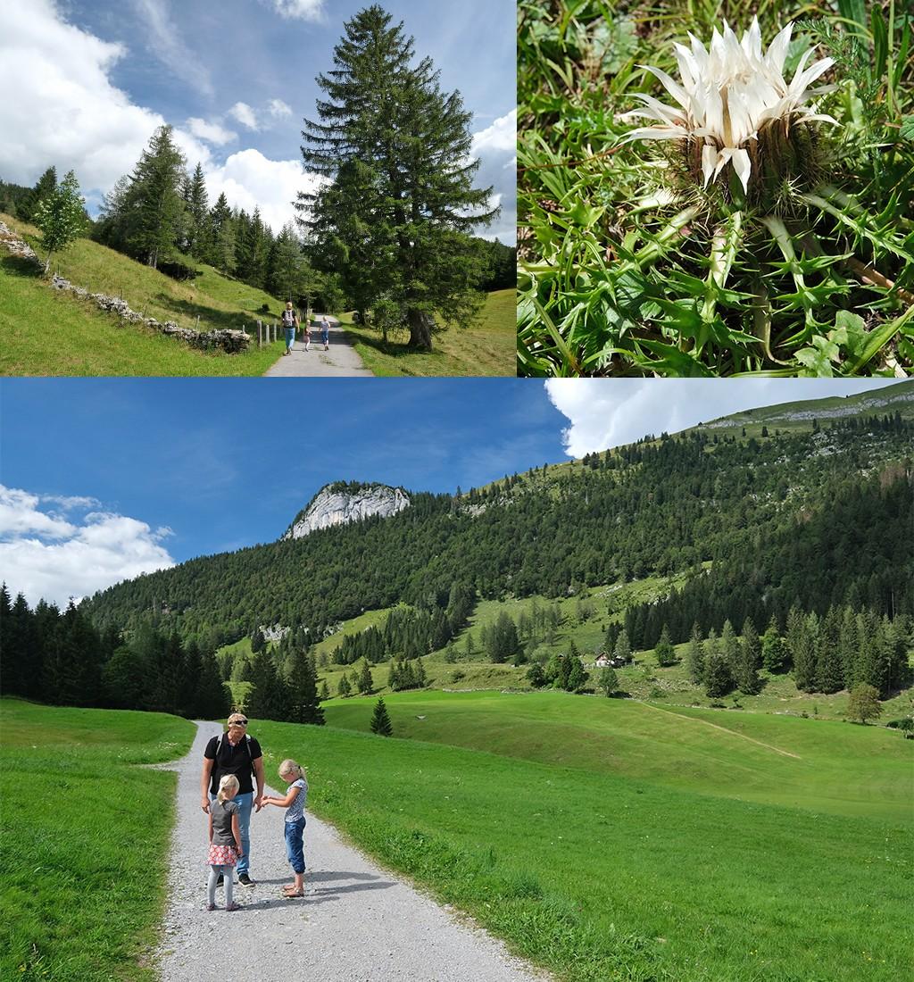 wandelen naar de Seewaldsee