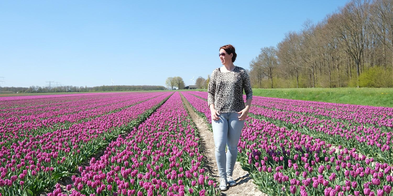 wandelen tulpenvelden - wandelingen buiten de Bollenstreek