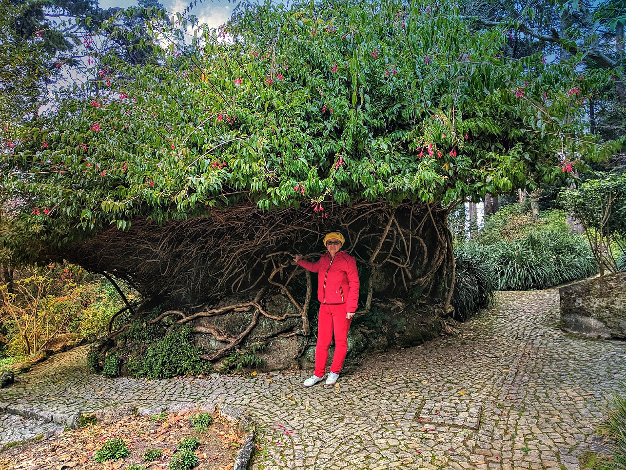 11 Top Reasons to Visit Portugal. Pena Palace gardens in December - still green and blooming.