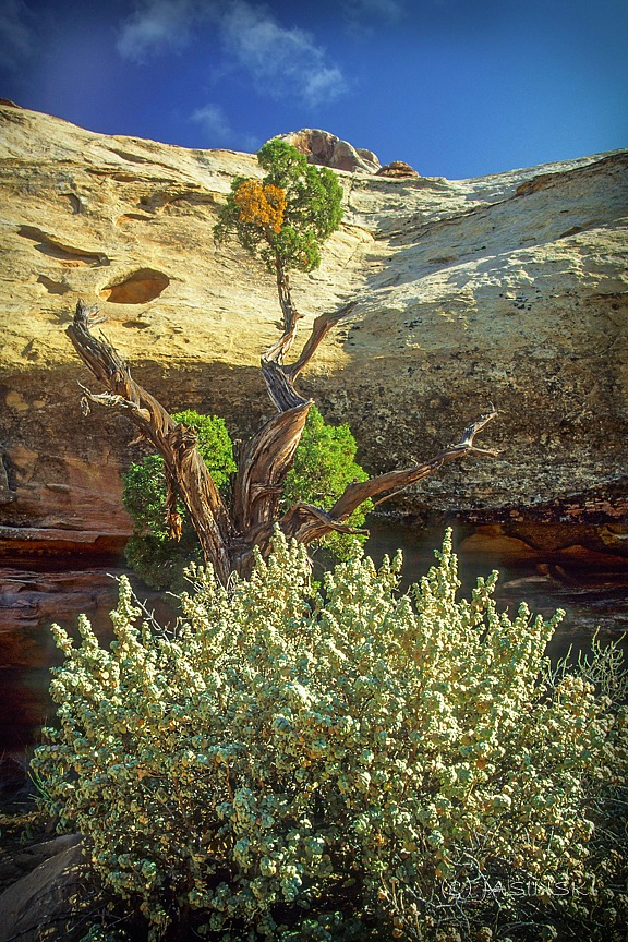 Why Utah Is the Best State for Nature Lovers. Canyonland National Park - beauty in a desert. Photo courtesy of Jakub Jasinski.