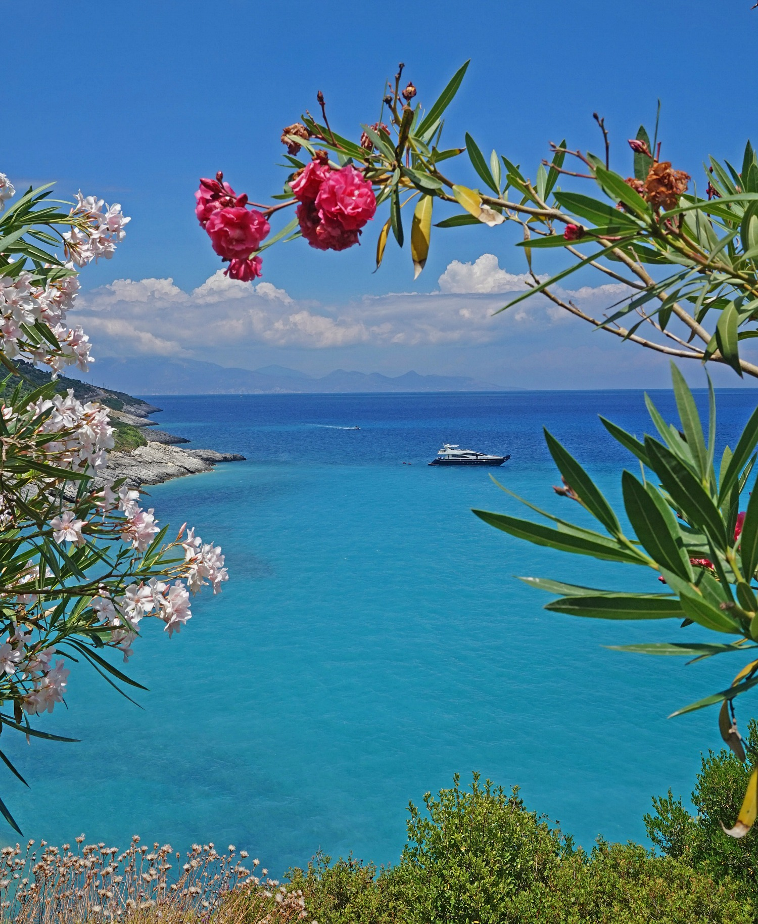 Zakynthos Greece - how to visit. View of the see through flowers.