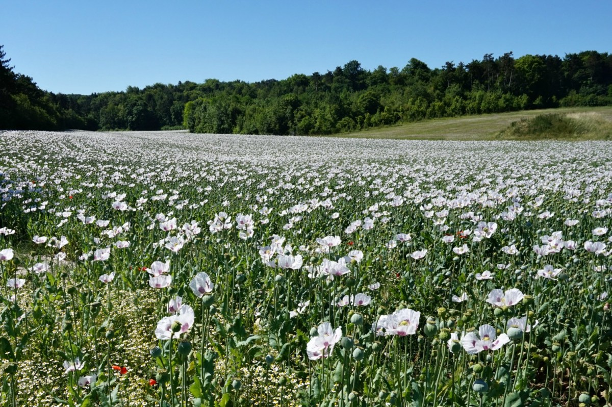 Living and traveling with cancer. Champagne region of France - meadow.