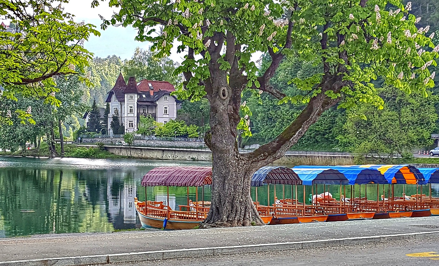 Morning view of the boats in Lake Bled Slovenia.