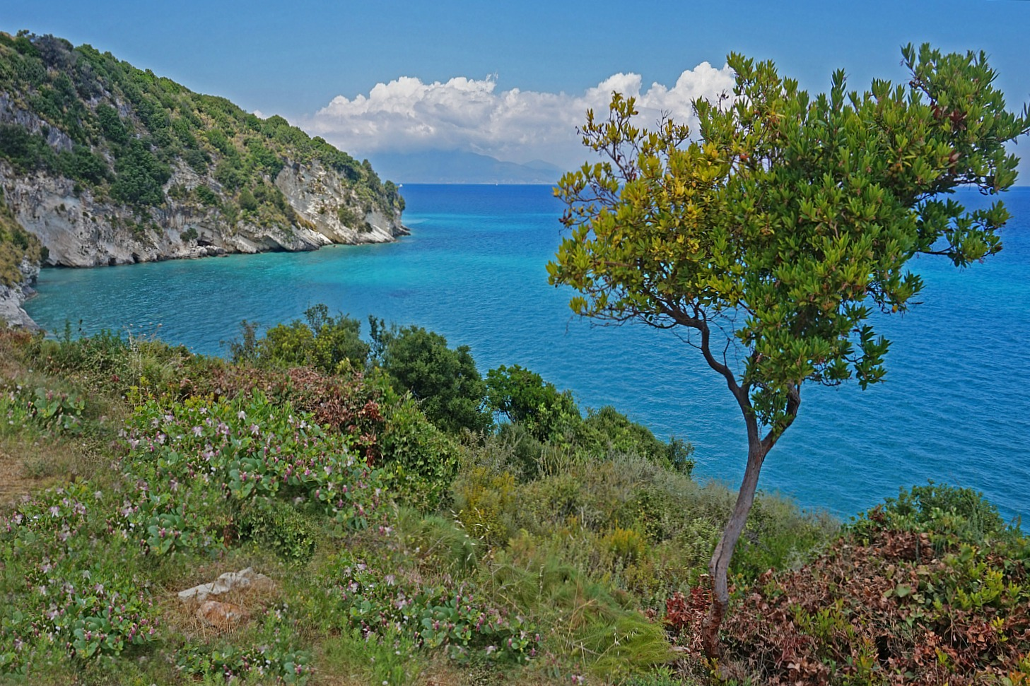 Zakynthos Greece - how to visit. Another beautiful view with tree.
