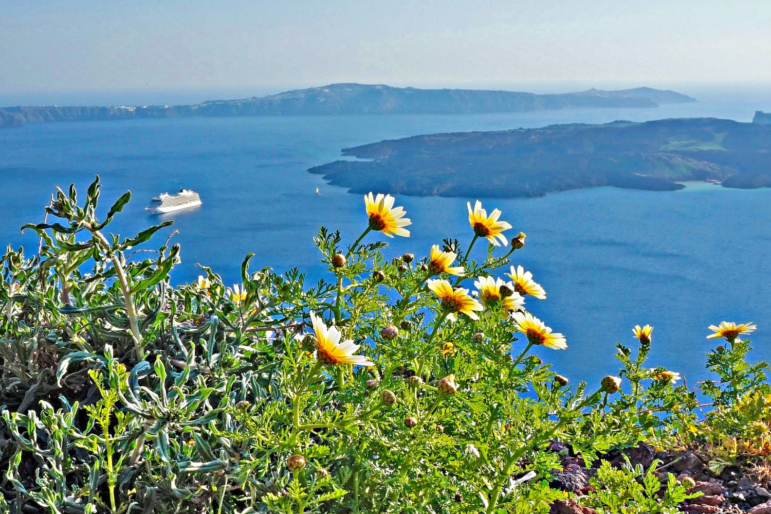 Imerovigli Santorini - a view of the caldera through the wildflowers.