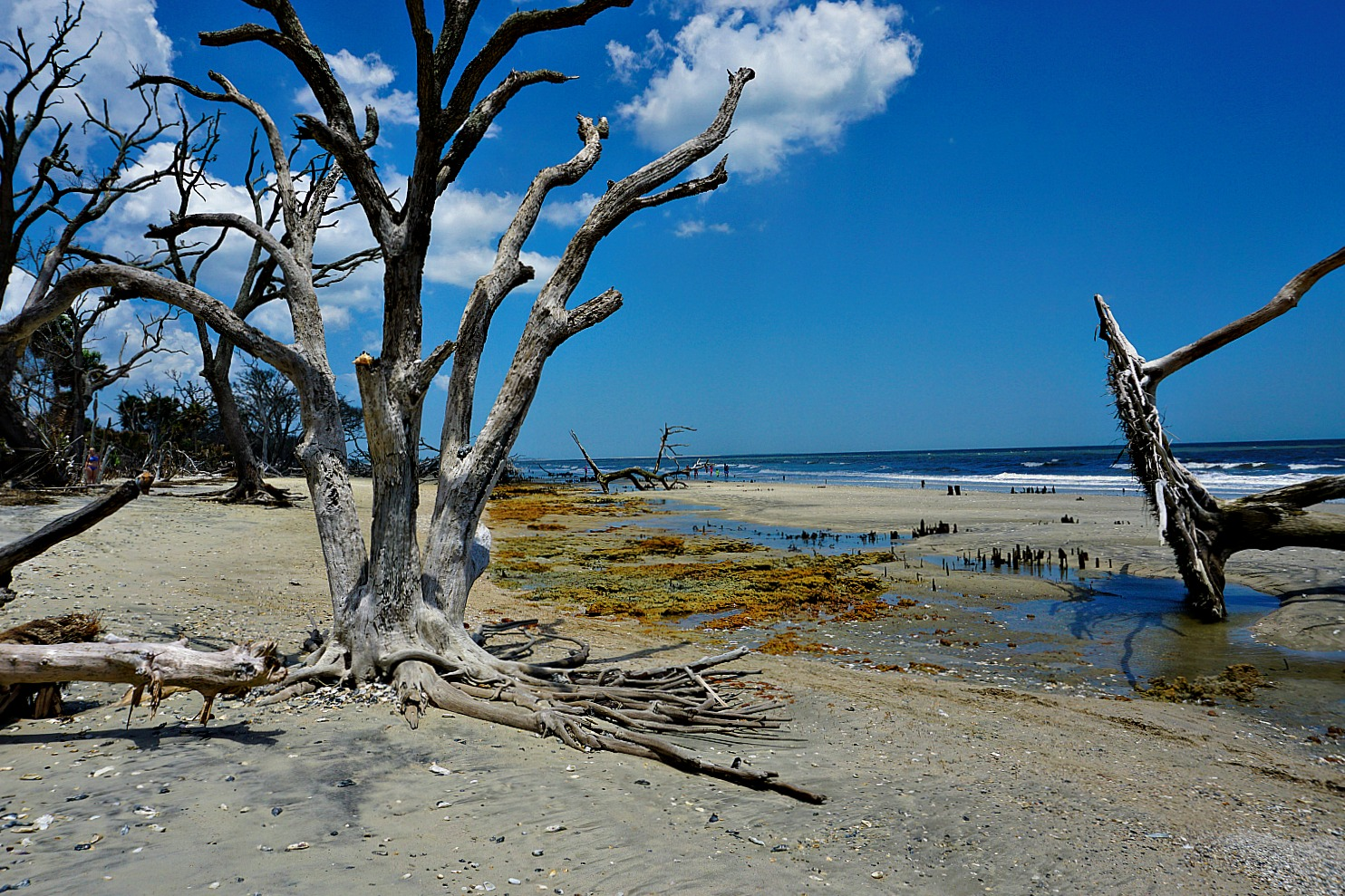 Boneyard Beach at Big Talbot State Park, Florida.