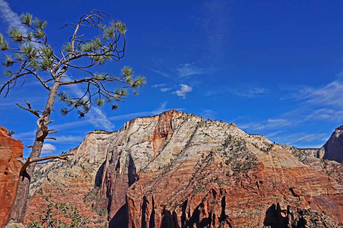 Zion National Park - things to do. Scenic Kolob Canyon Road.